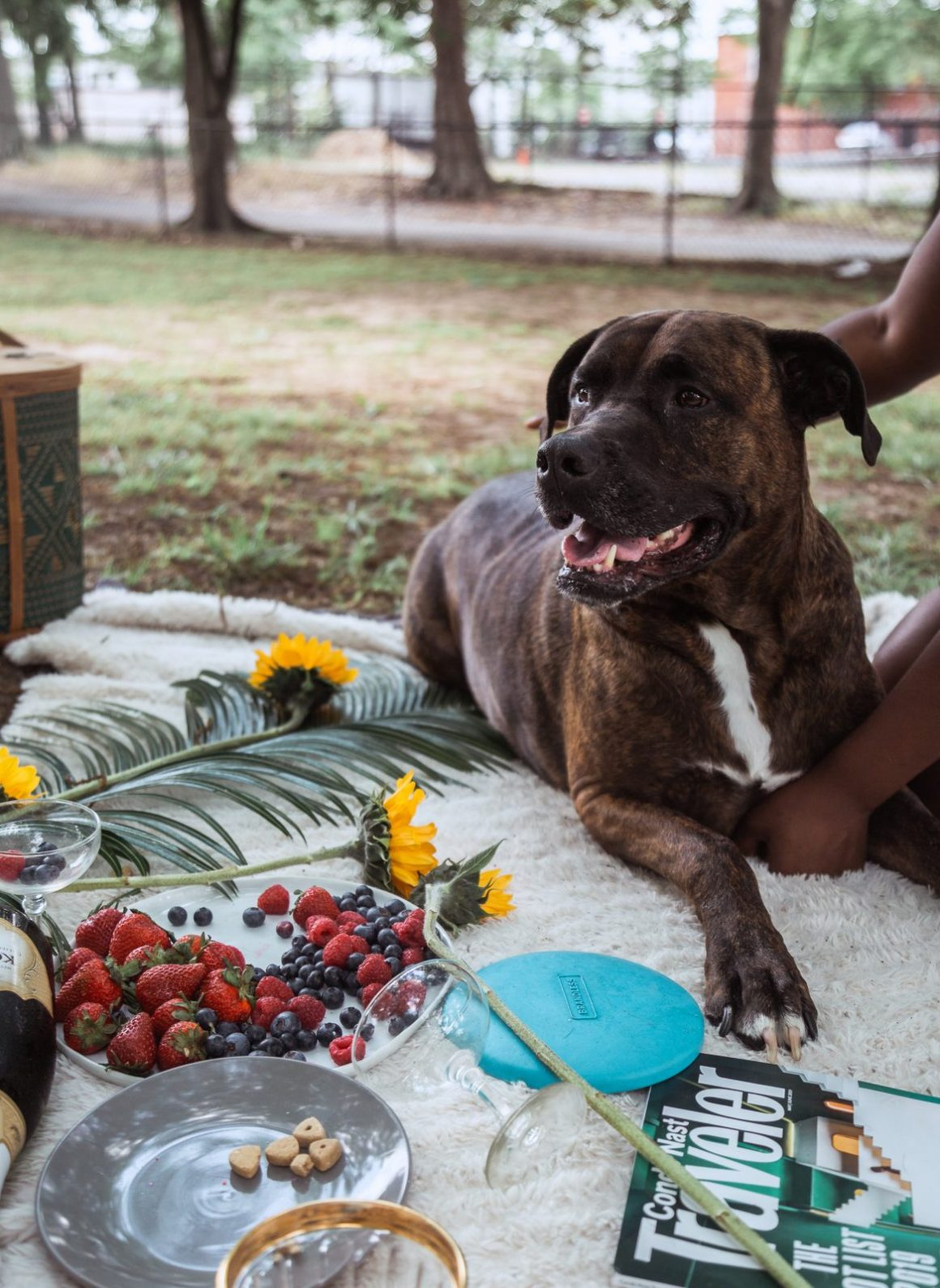 safe fruits and vegetables for your dog